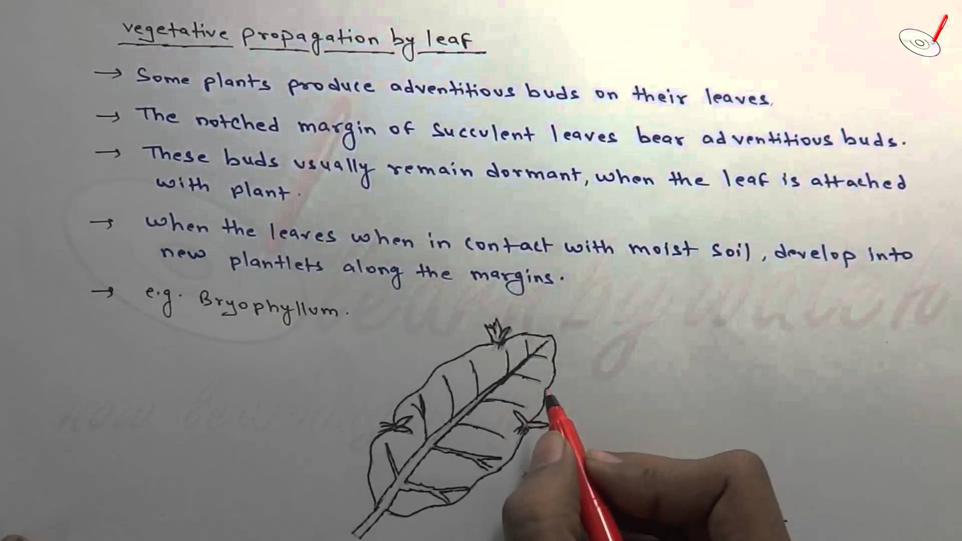Vegetative Propogation By leaf